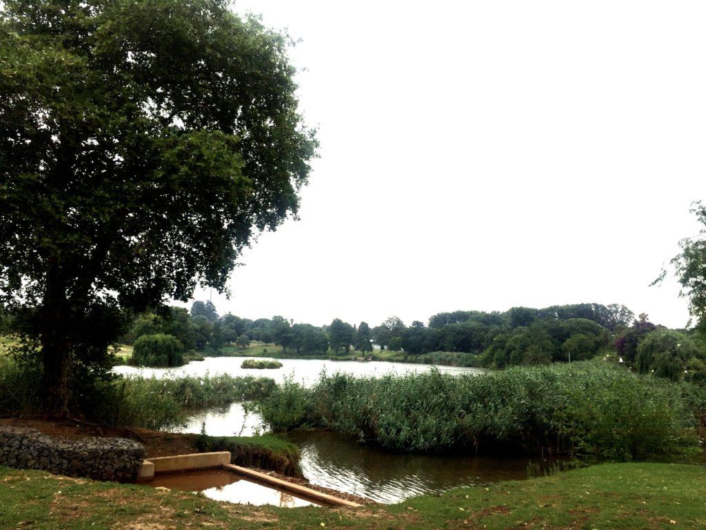 The park at the Westdene dam