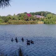 Westdene Dam in Johannesburg – Travel Review